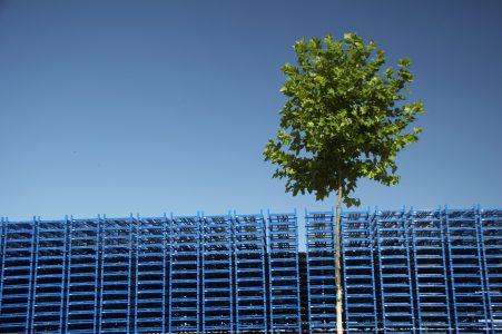 stack of blue palette of the logistic company - blue sky in background. young green tree in front